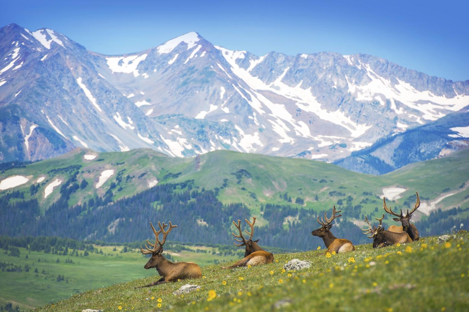 Rv Rental Rocky Mountain National Park 1 Rated